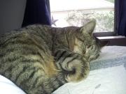 Missy asleep
