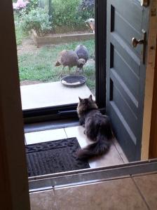 bubba turkey 2