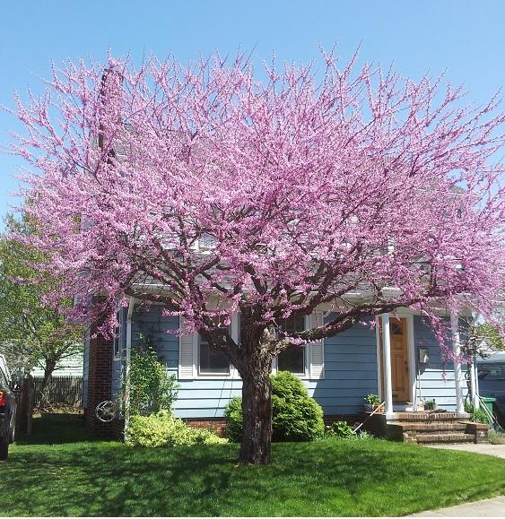 neighbors tree