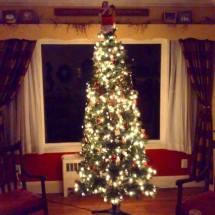 twinkle-tree